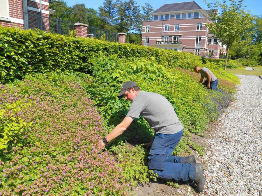 LooHorst Landscaping B.V. voldoet bovengemiddeld aan de landelijke norm (PSO) op het gebied van sociaal ondernemen